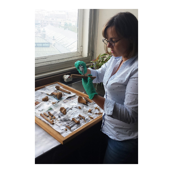 Archaeologist Caroline Laforest examining human bones at the Royal Belgian Institute of Natural Sciences in Brussels.
